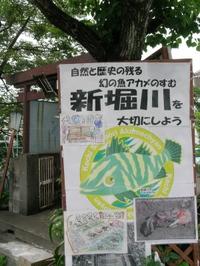 Sinborigawa761