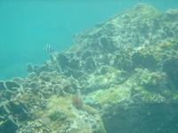 Okinishima5_1